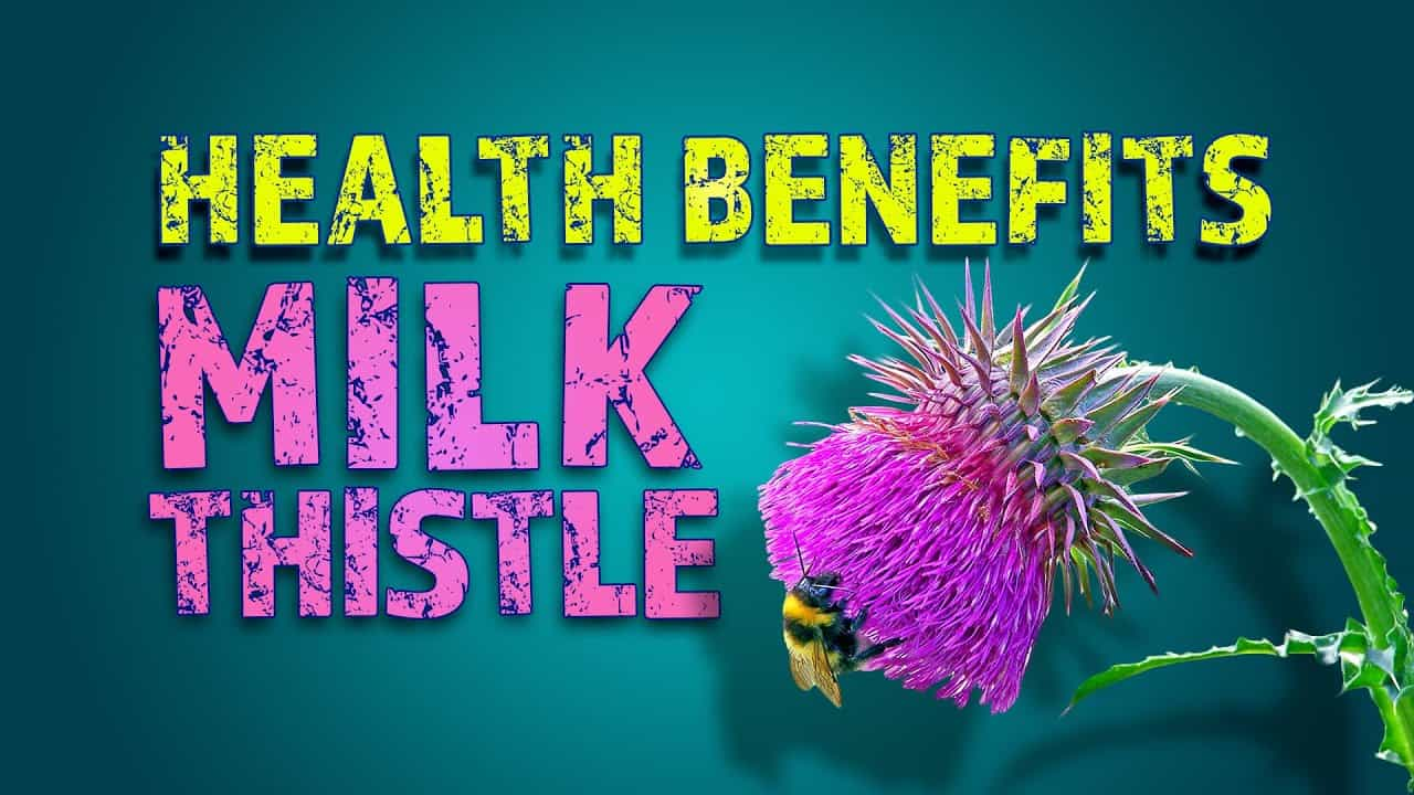 benefits-of-milk-thistle-for-liver-and-gallbladder-ailments